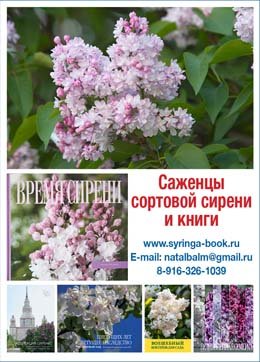 SYRINGA BOOK