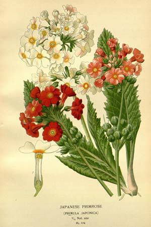 Step & Bois, Favourite flowers of garden and greenhouse_ 1896-1897