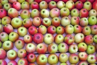 0_apples