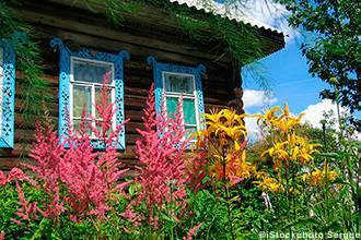астильба в традиционном русском дизайне